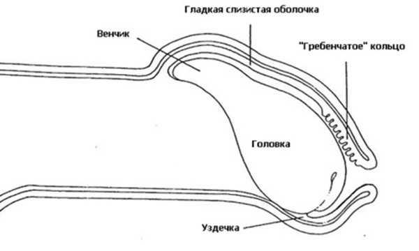 zachem-muzhiki-peretyagivayut-osnovanie-penisa-tugim-koltsom-vanessa-cheshka-porno-zvezda