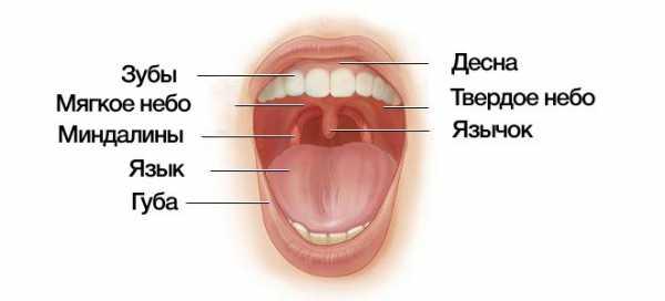 Причины желтого неба во рту и что делать с этим симптомом?